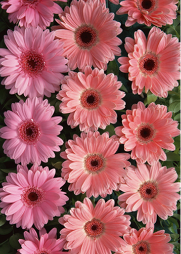 Как сделать анимацию фильтром Flowers