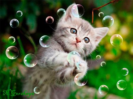 кисть мыльные пузыри