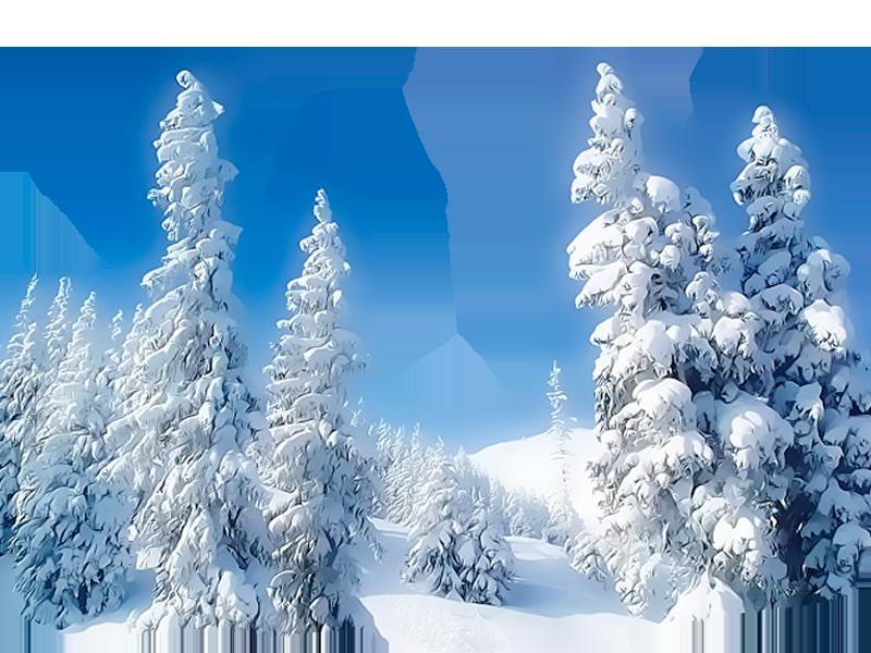 пейзаж с лесом